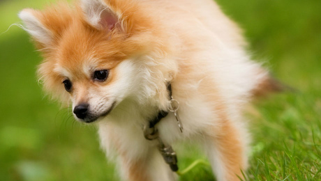 Fluffy toy dog in grass