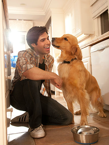 Labrador with owner