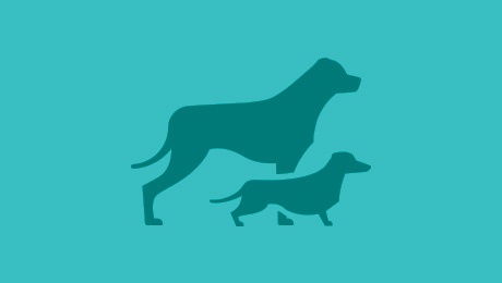 Big dog and small dog icon